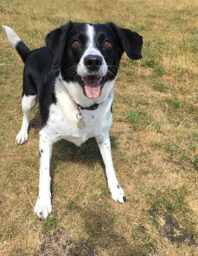 Dog Walker Southport Kew Churchtown Marshside