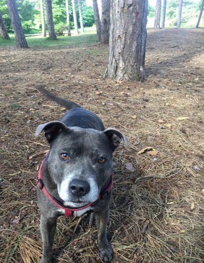 Dog walker Formby Freshfield Ainsdale