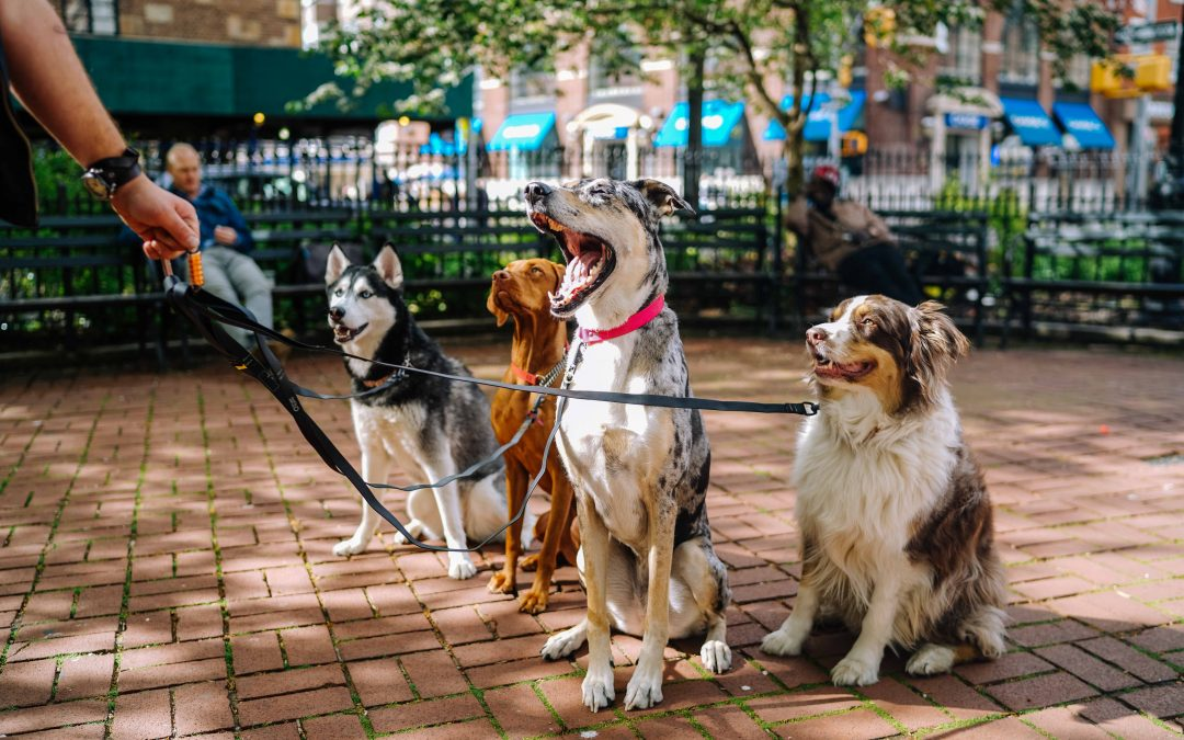 5 key things to look for when searching for a local dog walker