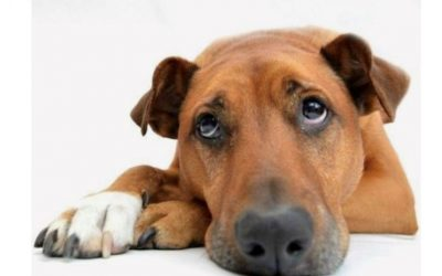 Top Tips on how to help Separation Anxiety with our pups
