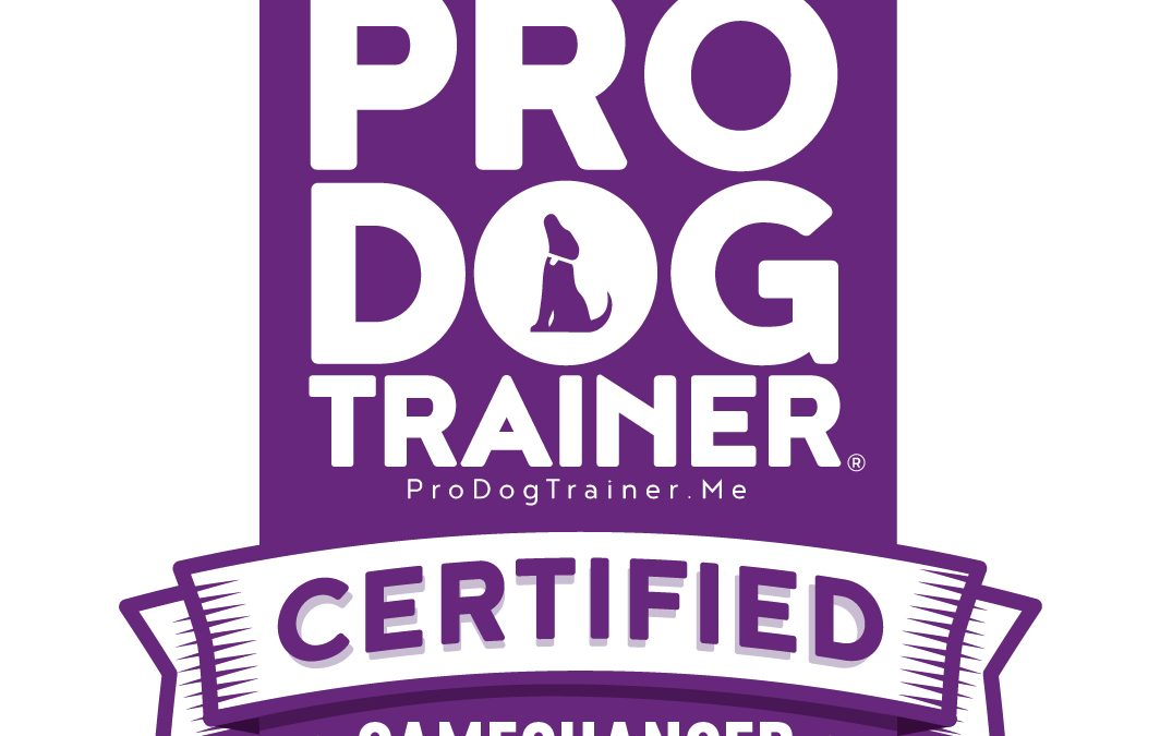 Looking for a Positive Dog Trainer in Southport?