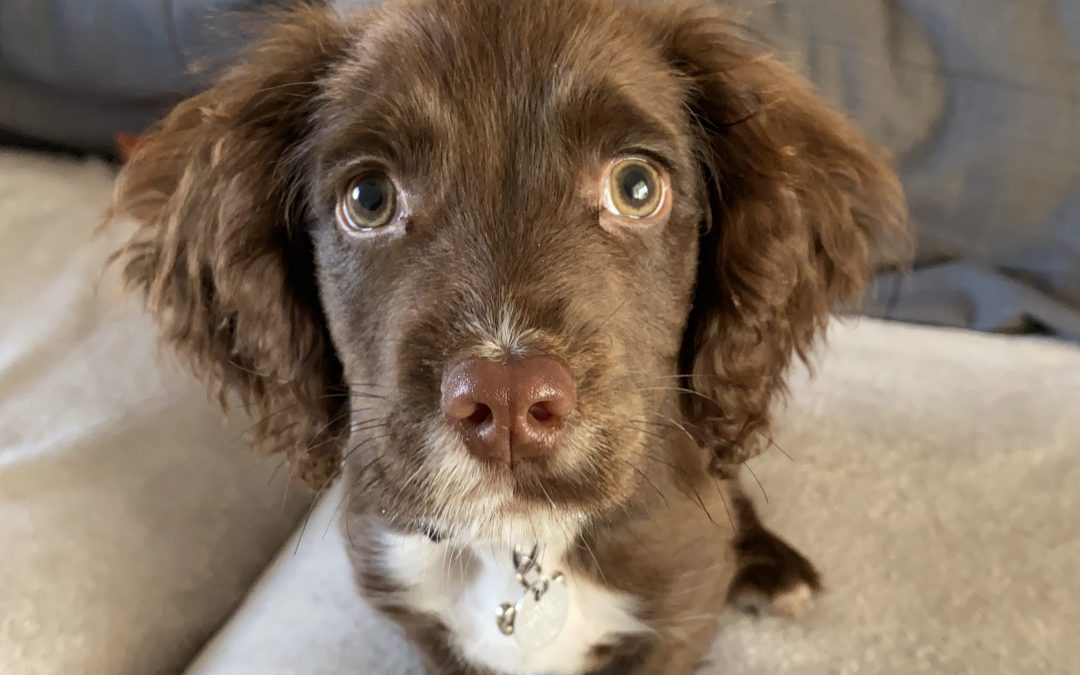 Do you have a new puppy, or want puppy training in Southport?