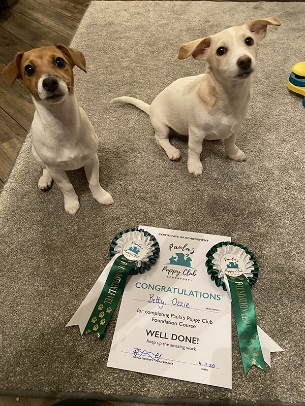 Puppies with their puppy class certificates